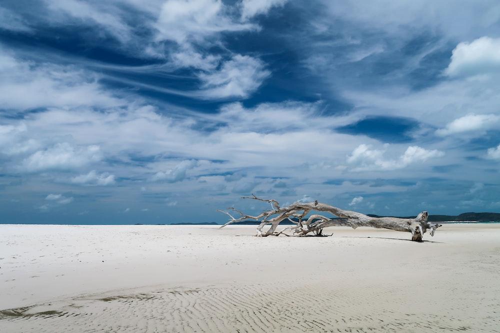 drift tree on shore