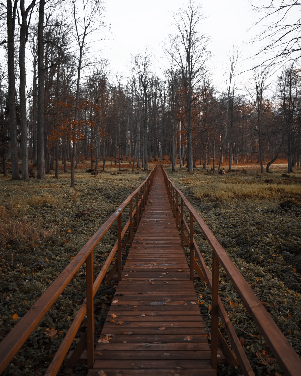 brown pathway near bare trees