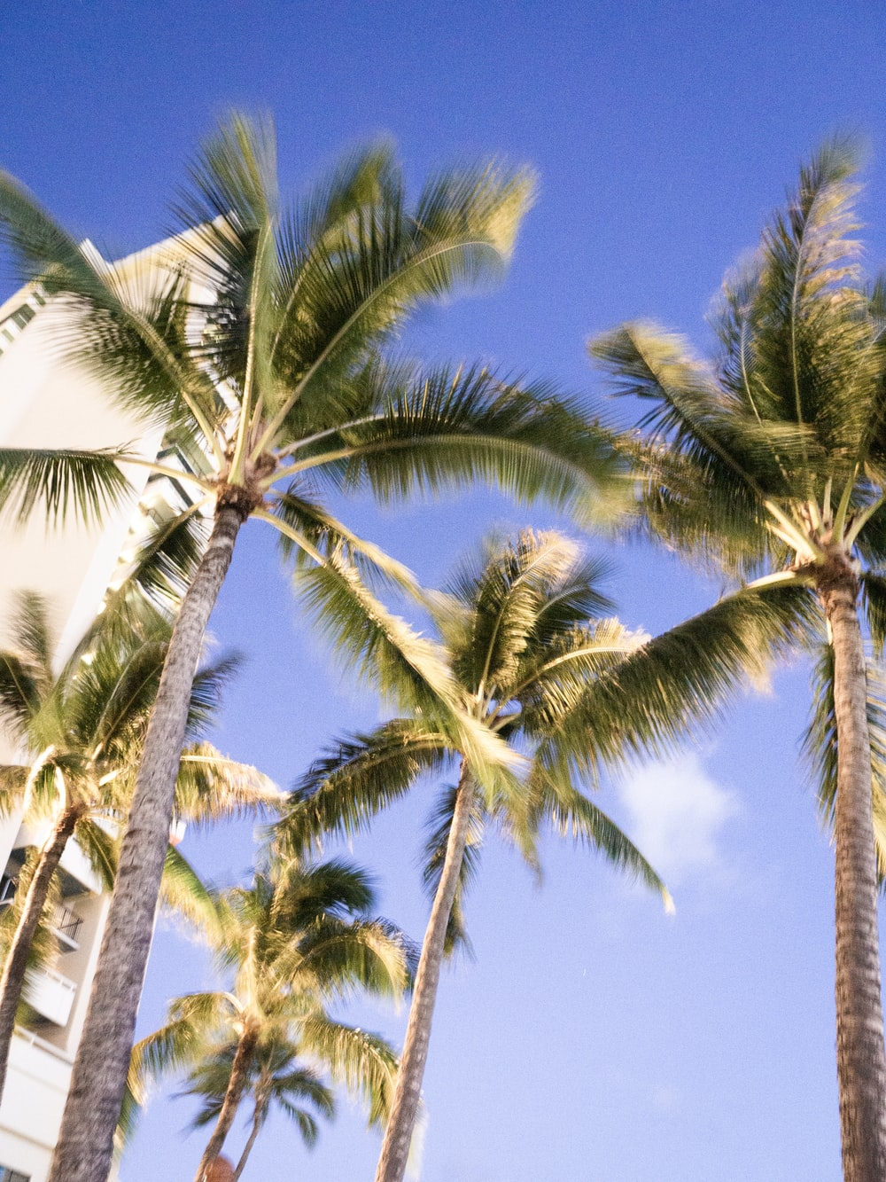 low angle photo of coconut trees near building