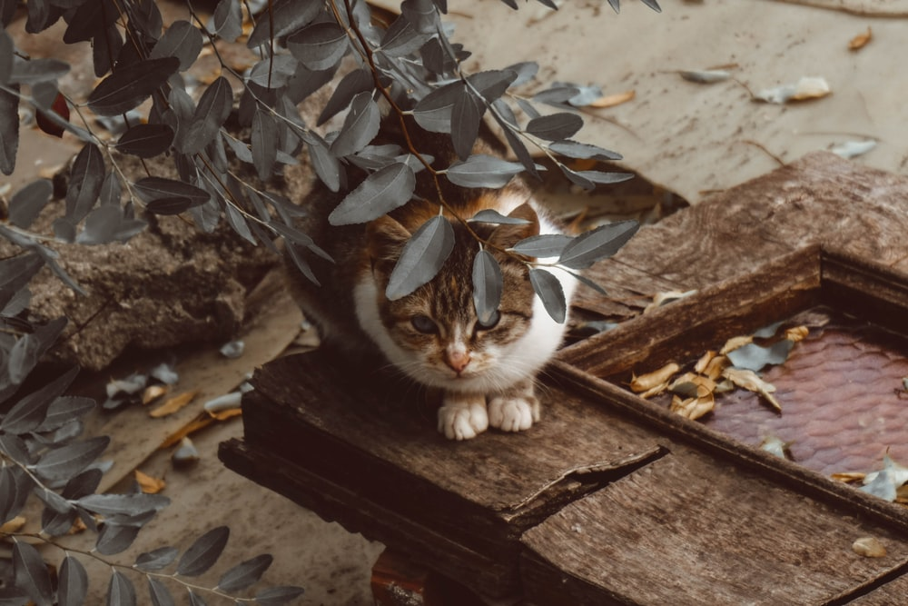 tabby cat under leaves