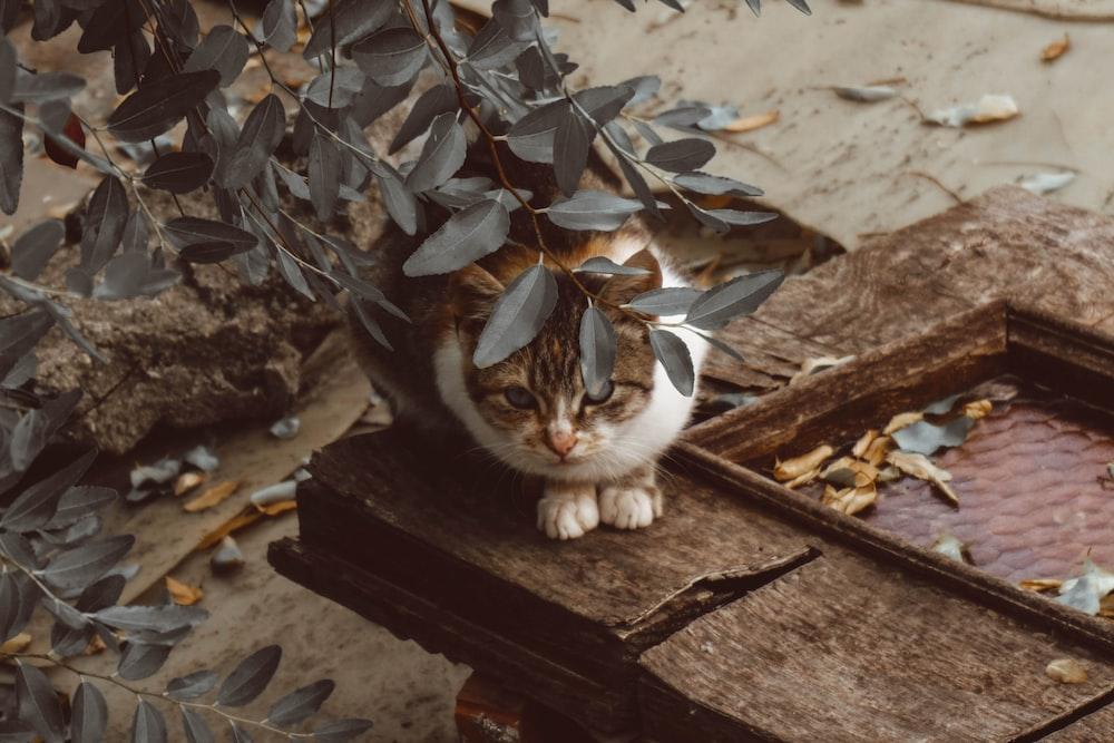 tabby cat under leaves