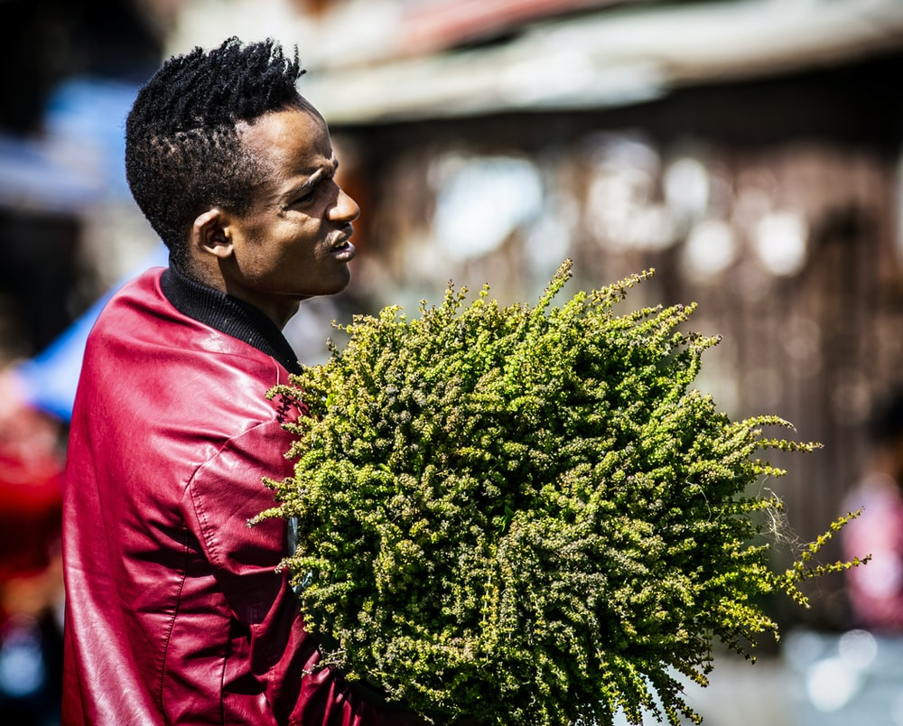 man carrying green plants