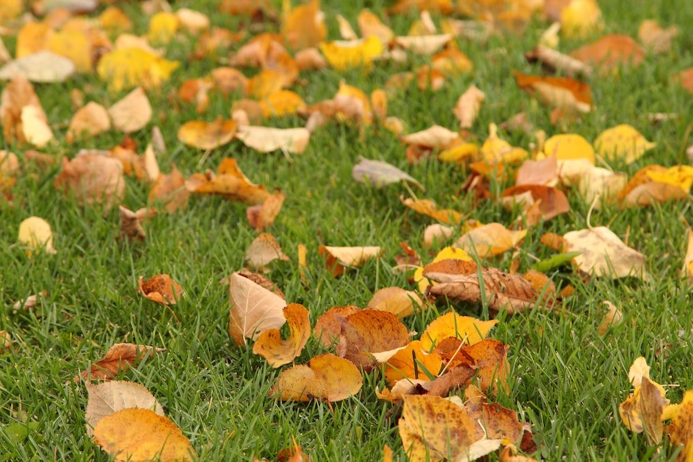 brown dry leaves on grass field