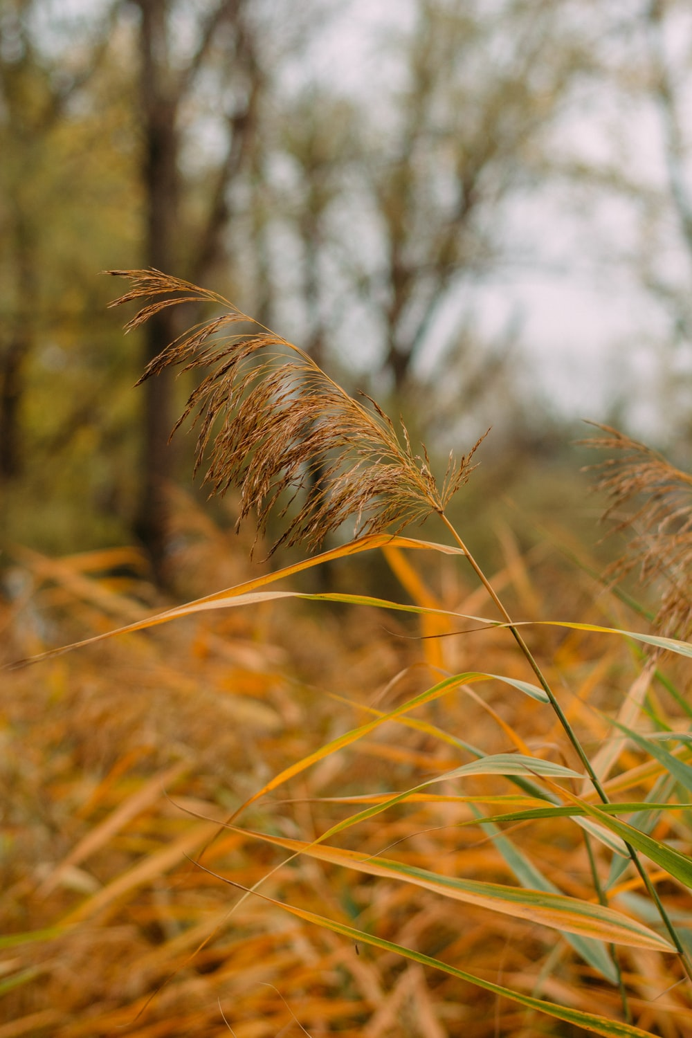 selective focus photography of yellow-green grass
