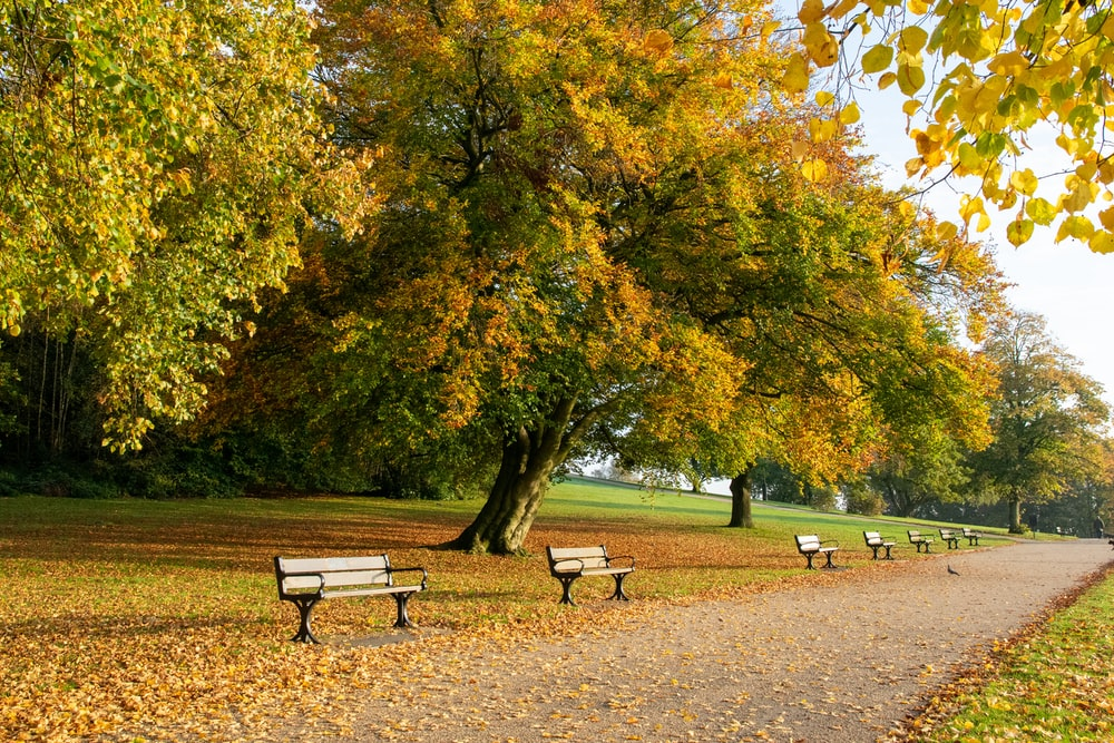 four brown benches surrounded by trees