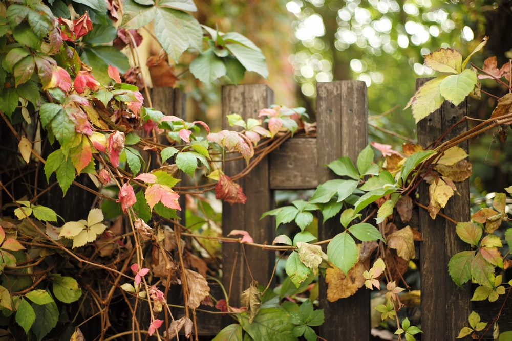 green leafed plant on wooden fence