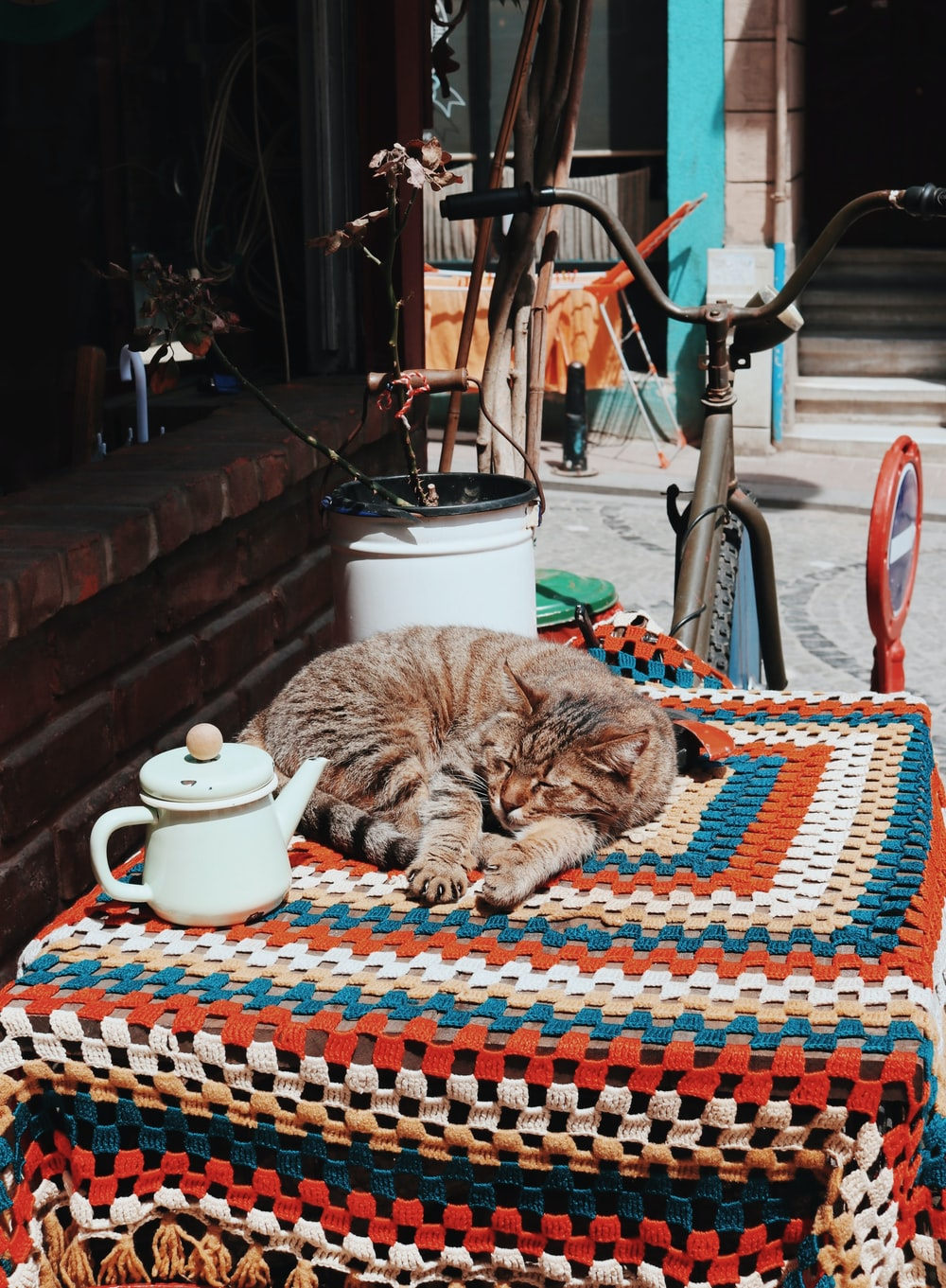 sleeping cat on table