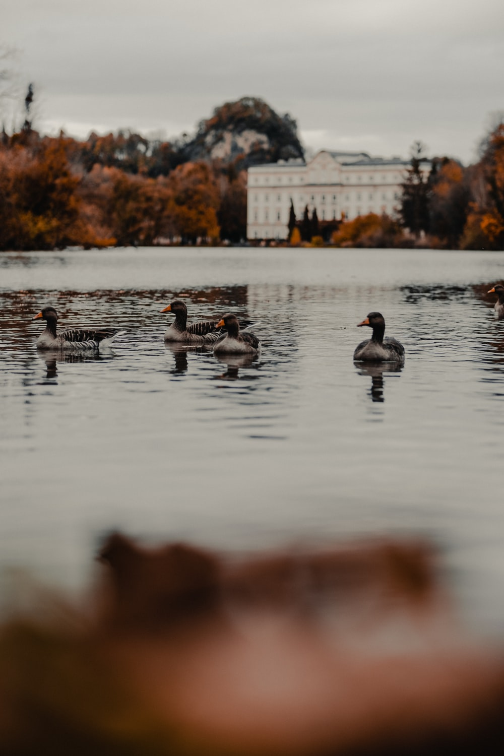four gray ducks of body of water during daytime