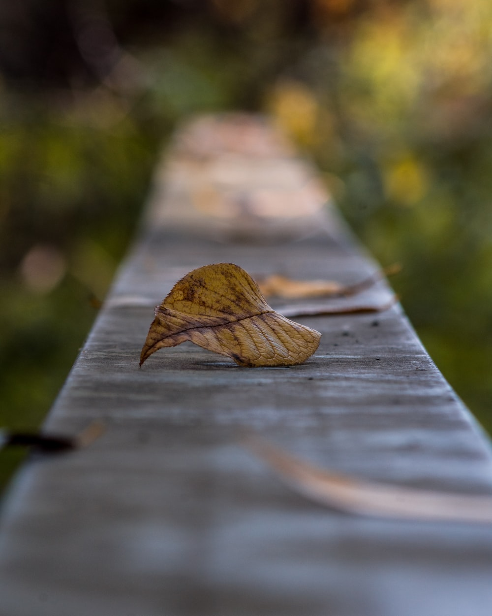brown leaves on bench