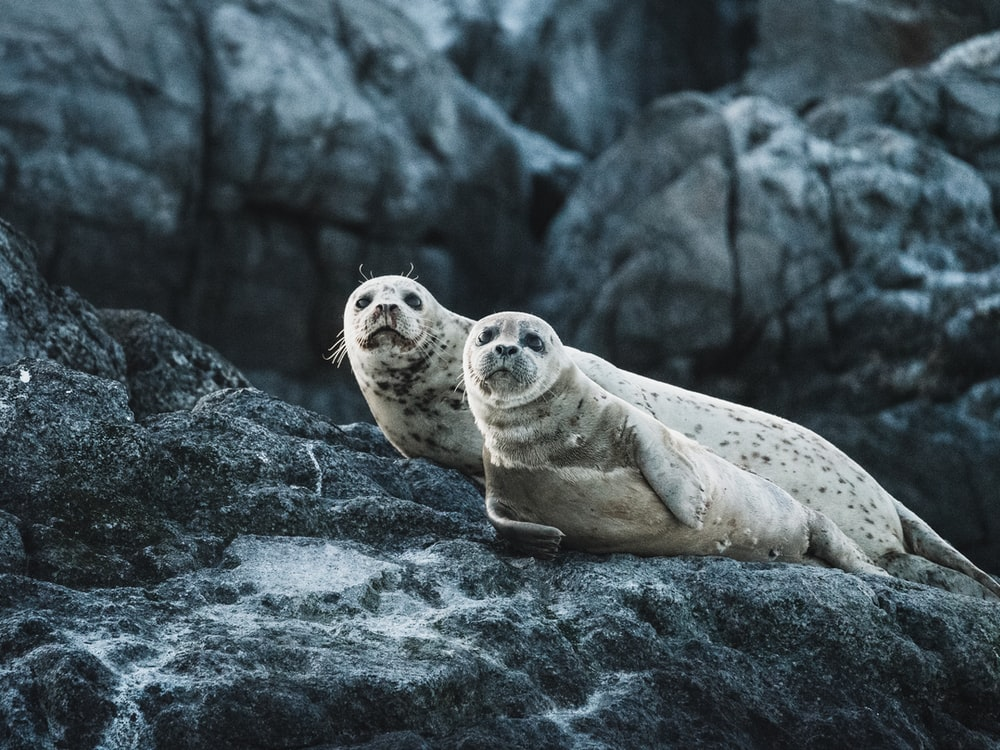 photo of seals