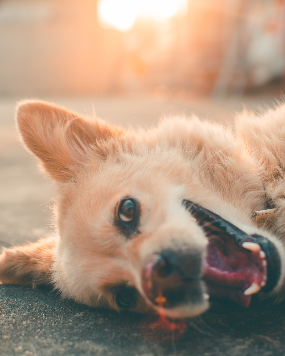 selective focus photography of brown dog lying on ground
