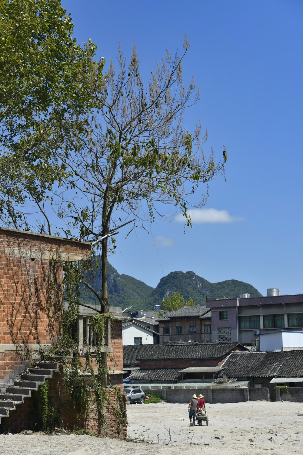 green leafed tree beside house