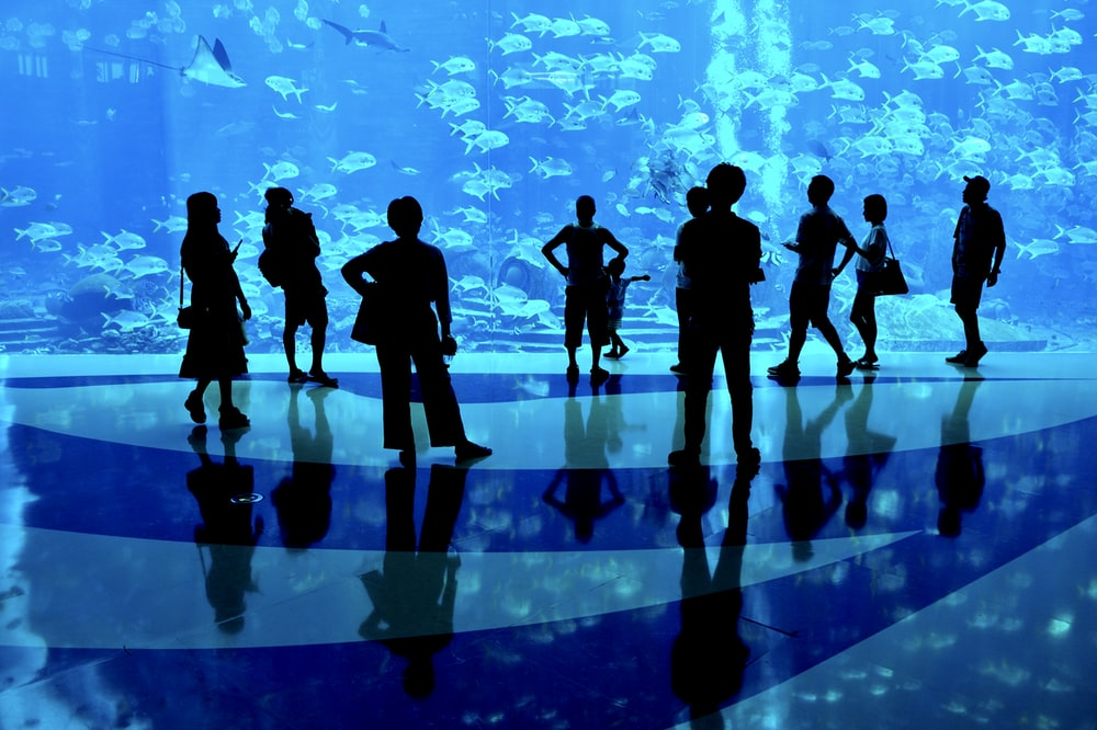 silhouette of people in front of acquarium