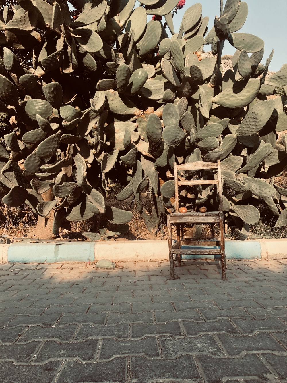 brown wooden chair beside green plants