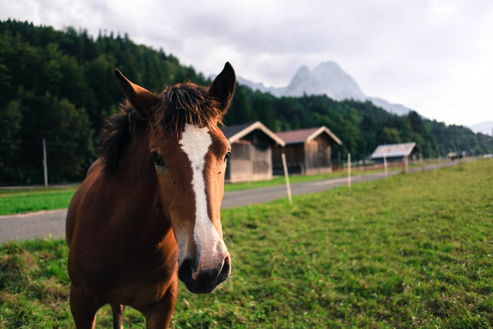 shallow focus photo of brown and white horse