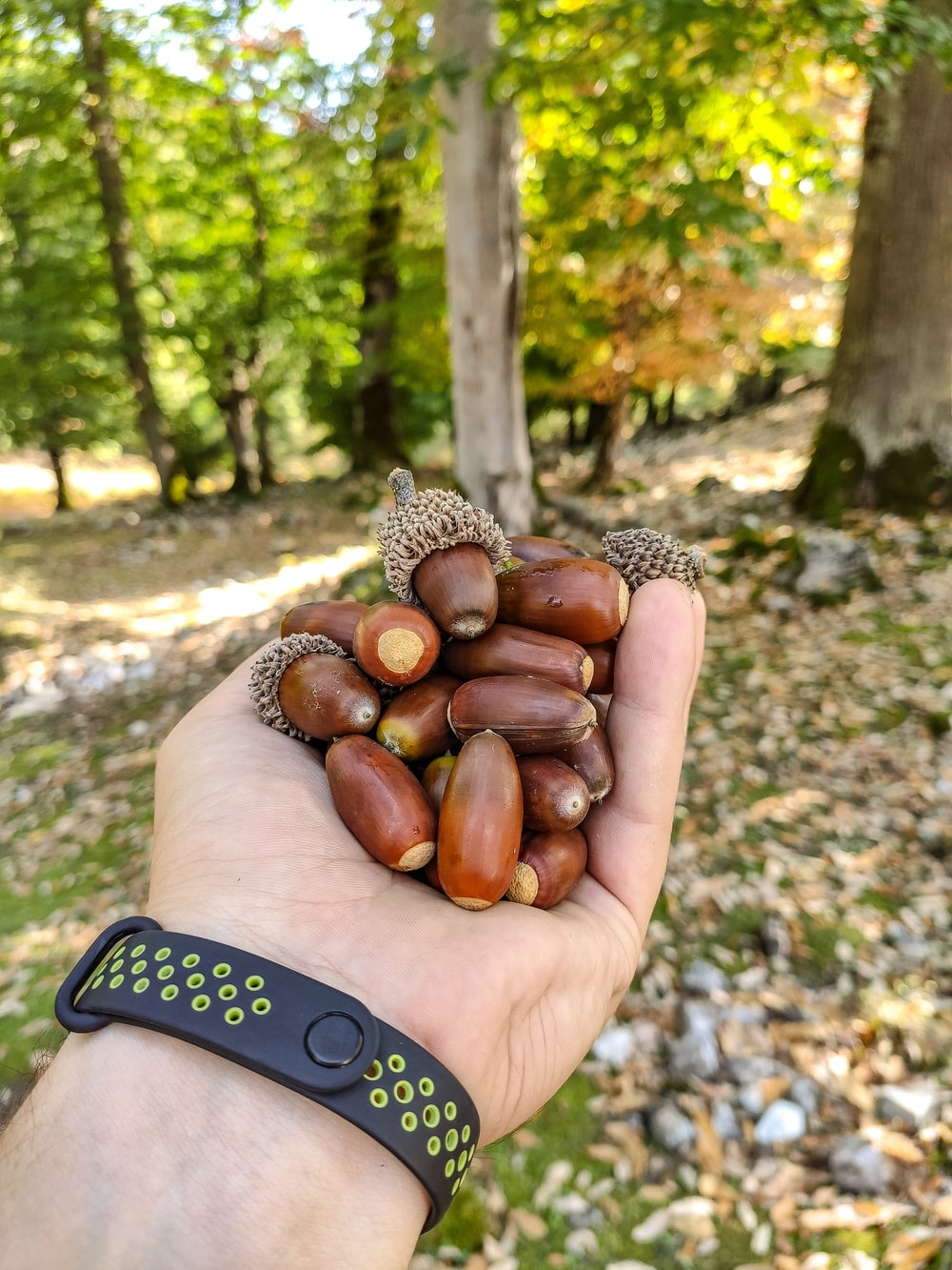person holding brown nuts