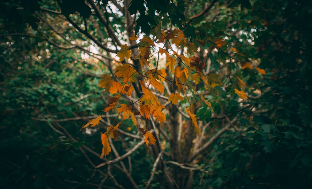 shallow focus photo of orange leaves