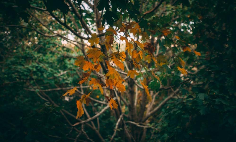 shallow focus photo of orange leaves