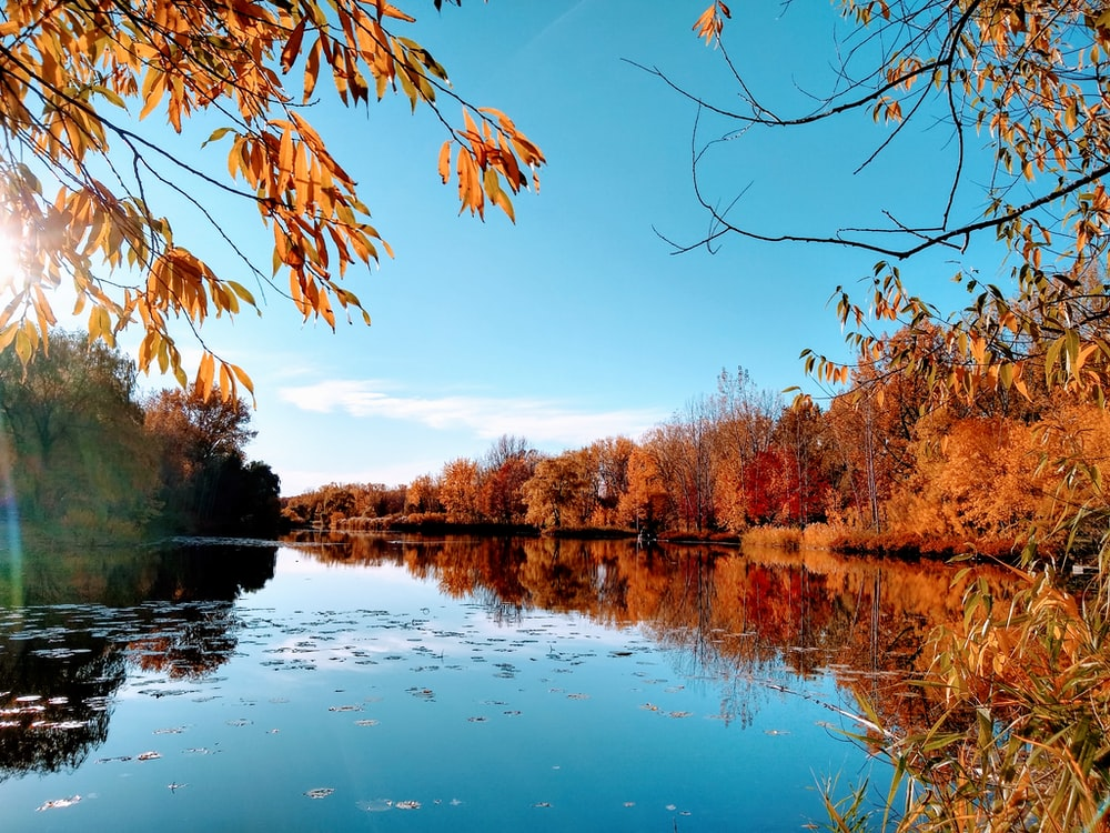 reflection of brown trees on water under blue sky