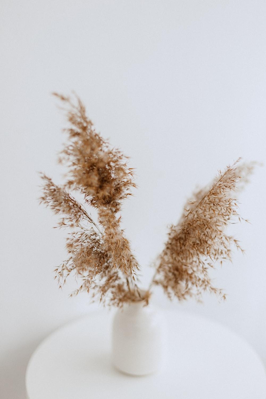 brown decorative plant in white vase