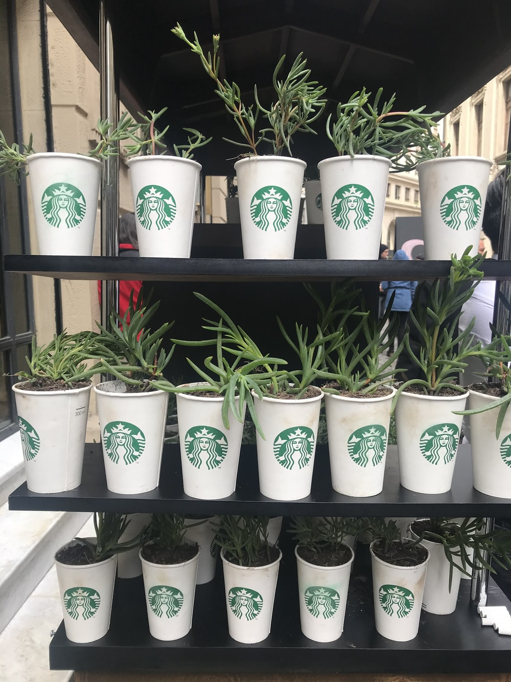 green plants planted on Starbucks cups