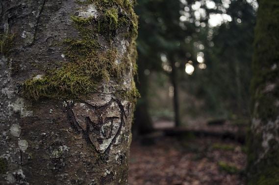Baum mit Herz und Initialen geschnitzt