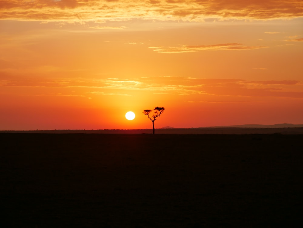tree during sunset
