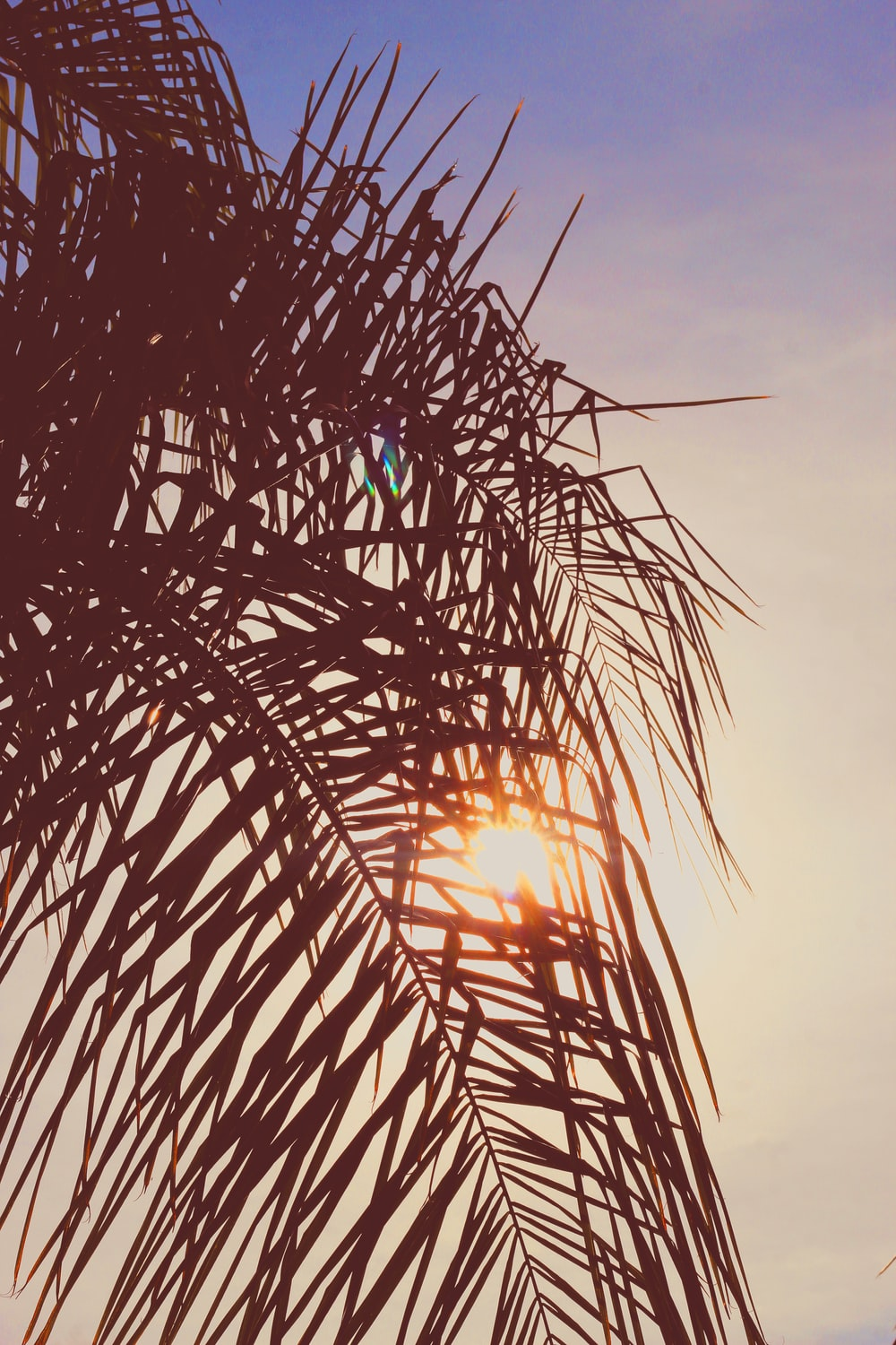 silhouette of palm tree sunset