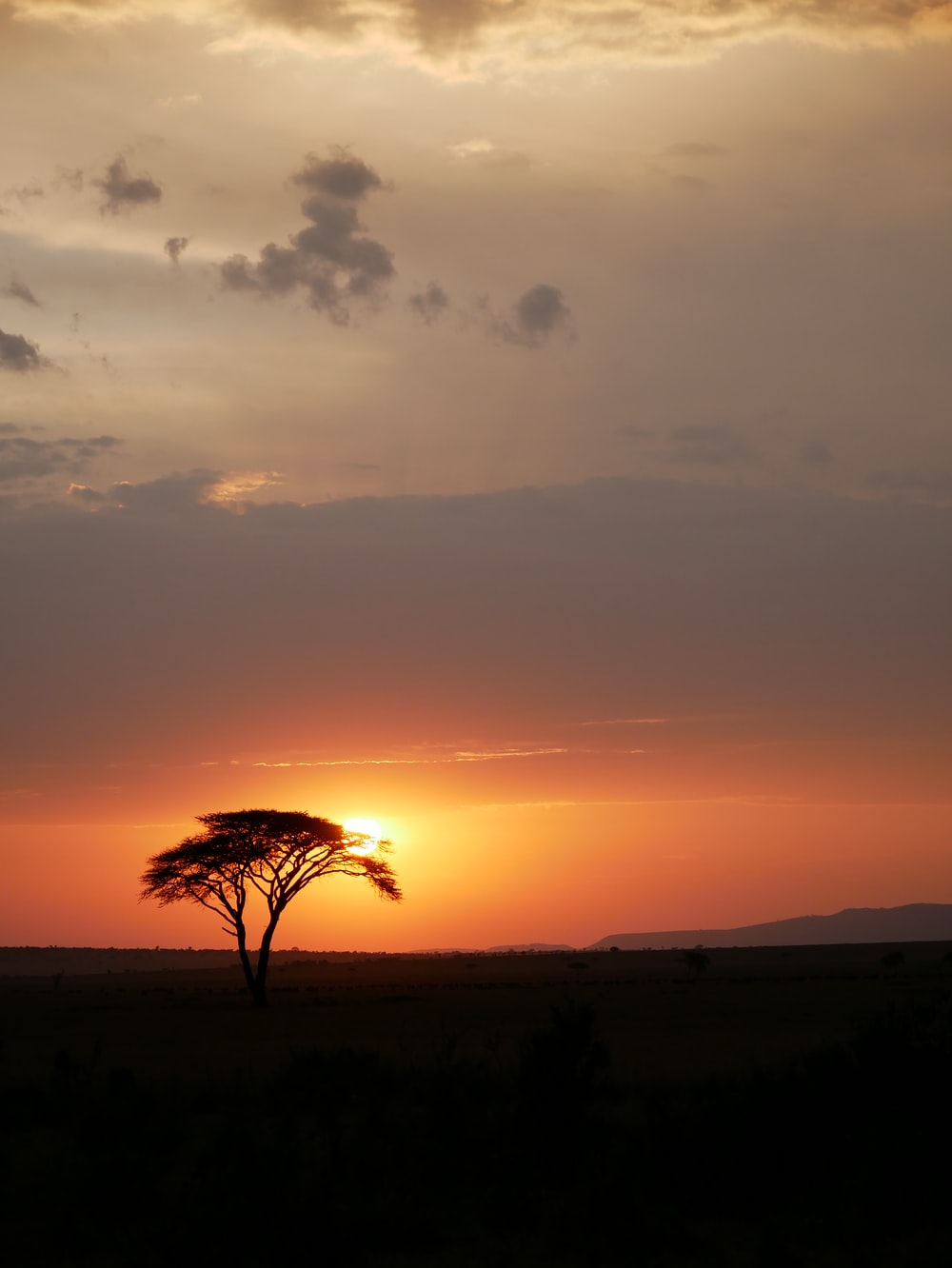 silhouette of tree on plain during golden hour