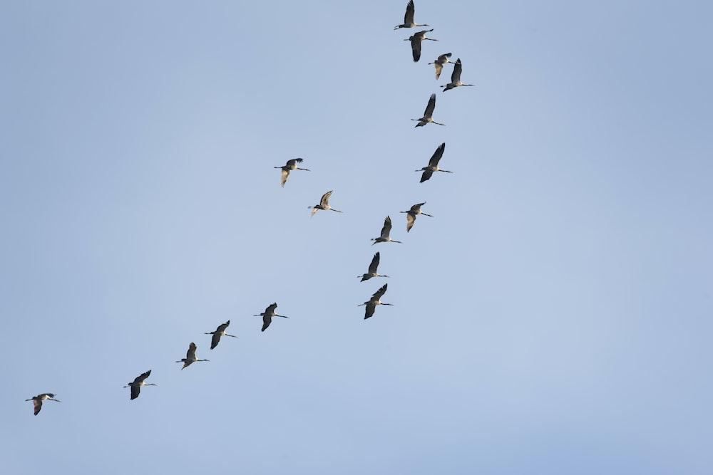 photo of gray bird midair