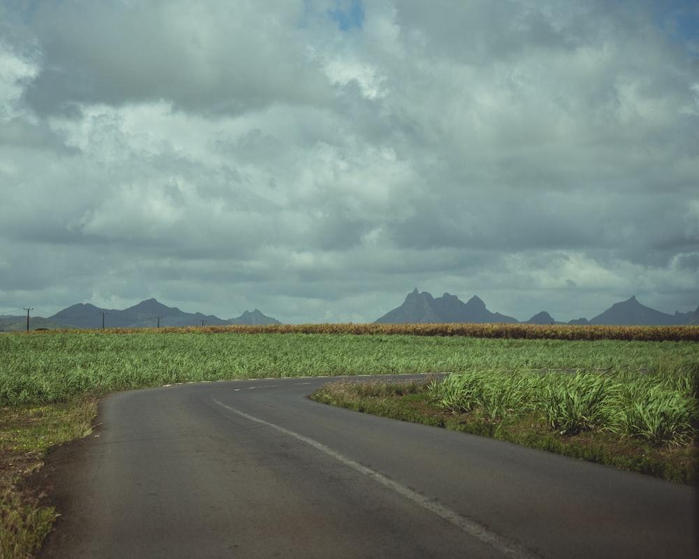 crop field near road