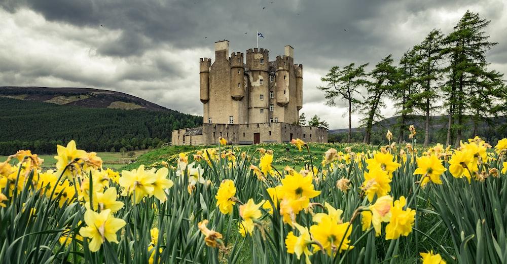 gray concrete castle on yellow flower fields