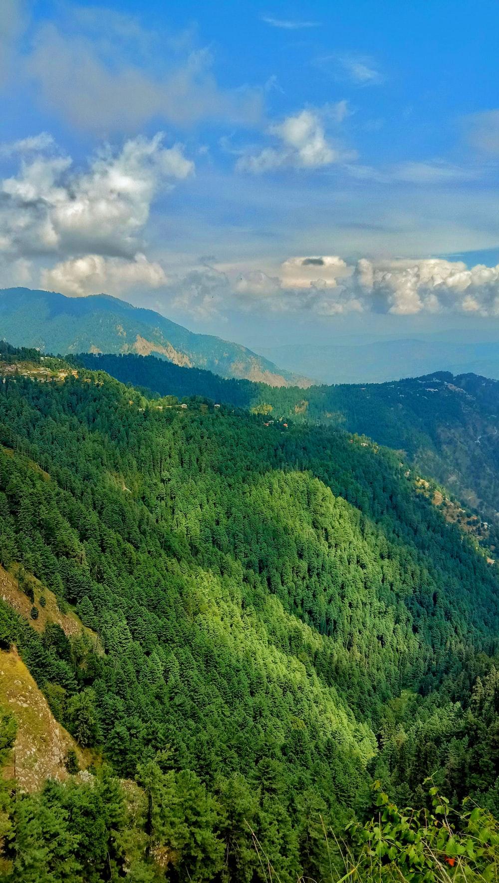 tall trees on hills
