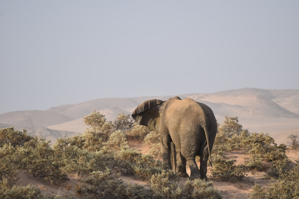 gray elephant in forest