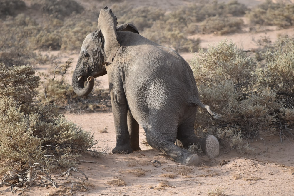 gray elephant near plants