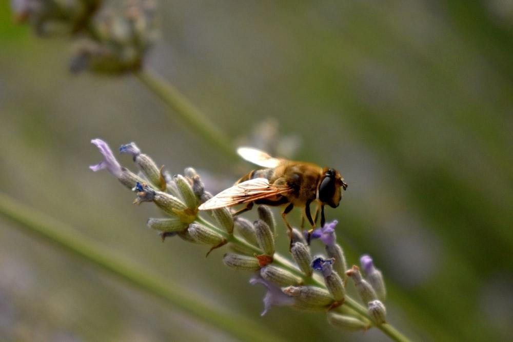 orange and black bee perching on purple flower bud during daytime
