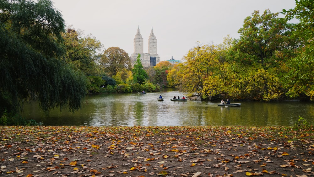 boats on body of water near trees and buildings during daytime
