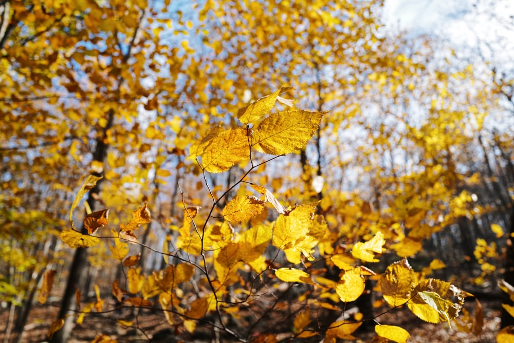 yellow leaf trees under white and blue sky during daytime