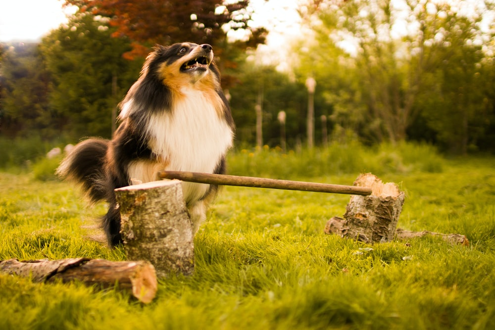 selective focus photography of brown and white dog beside cut wood