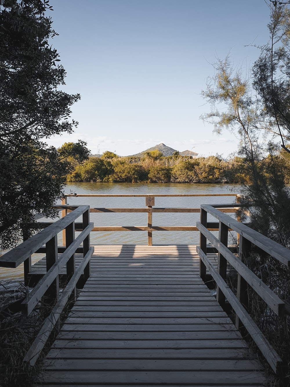 brown wooden dock near lake