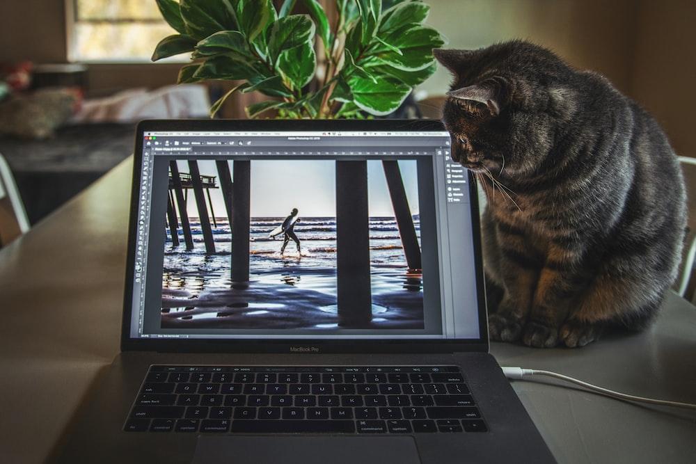 cat sitting beside gray laptop