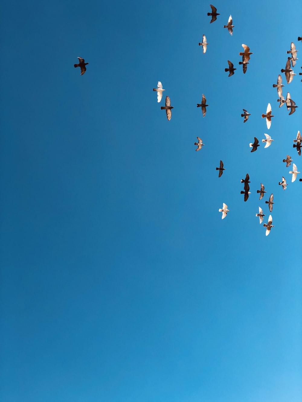 flock of bridges flying on blue sky