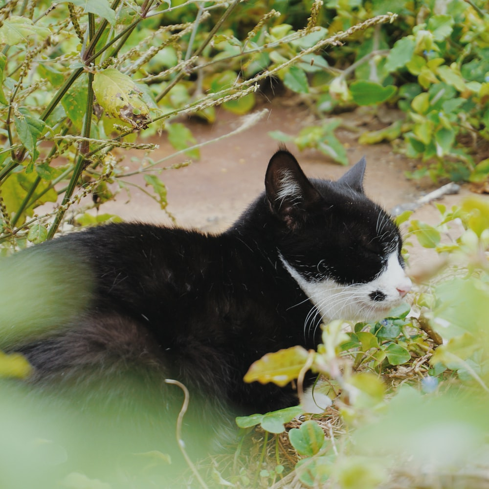black and white cat near plant