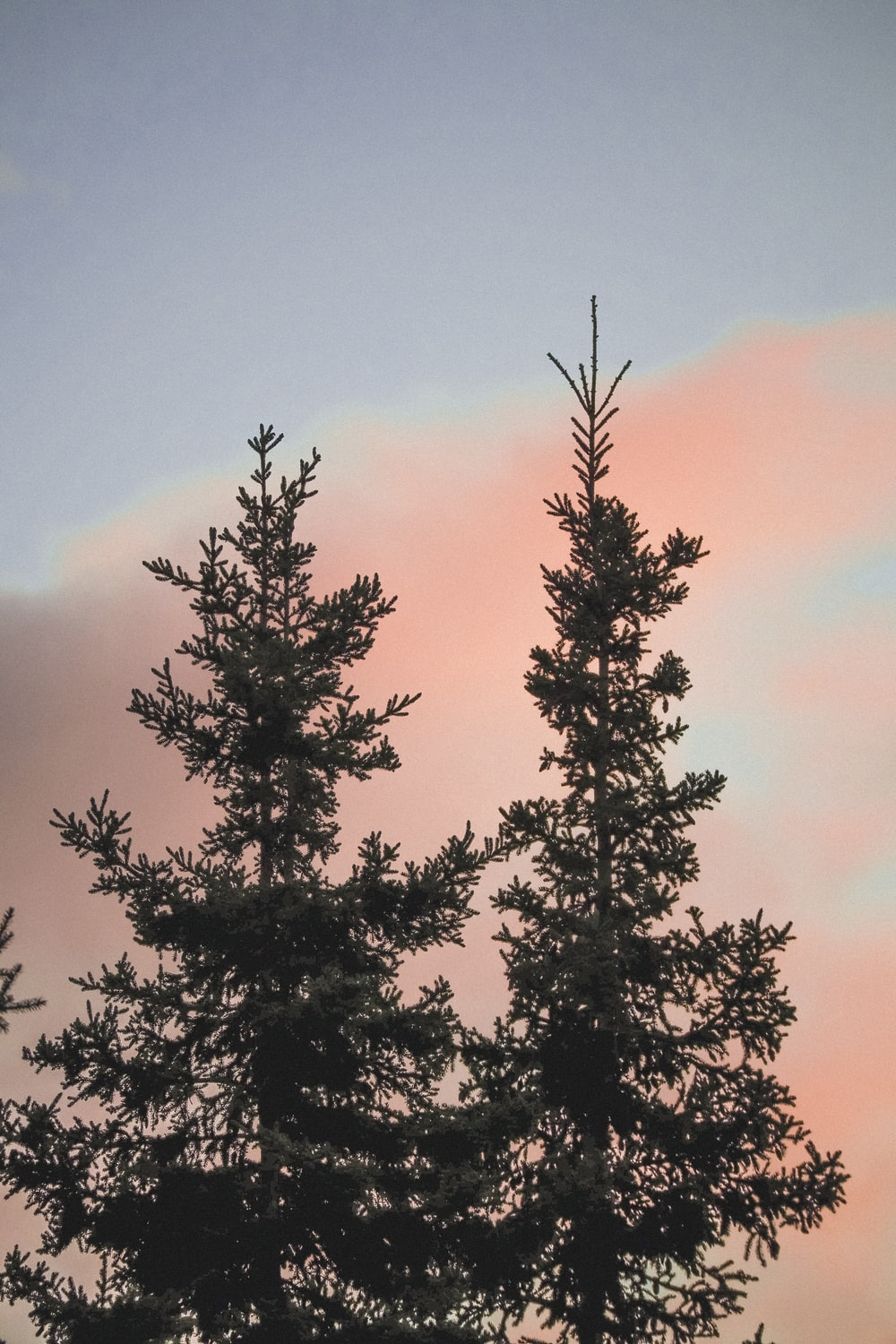 two green trees under red clouds