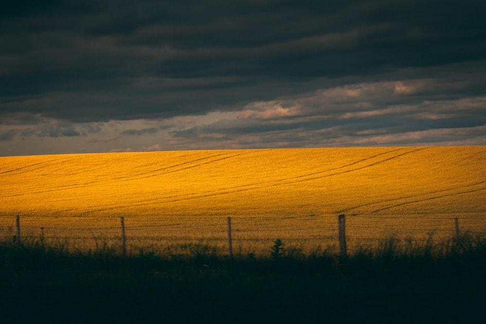 silhouette of grasses