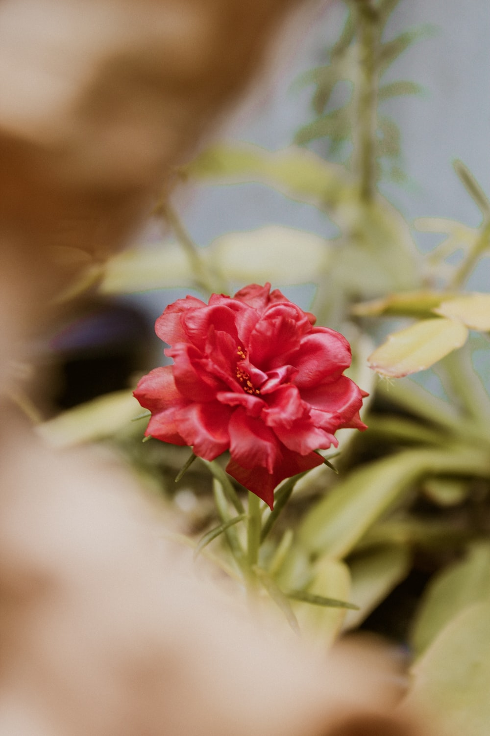 red petaled flower close up photo