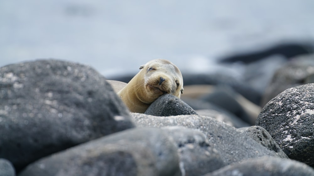 photo of seal