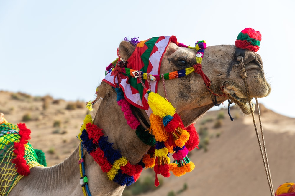 selective focus photo of camel
