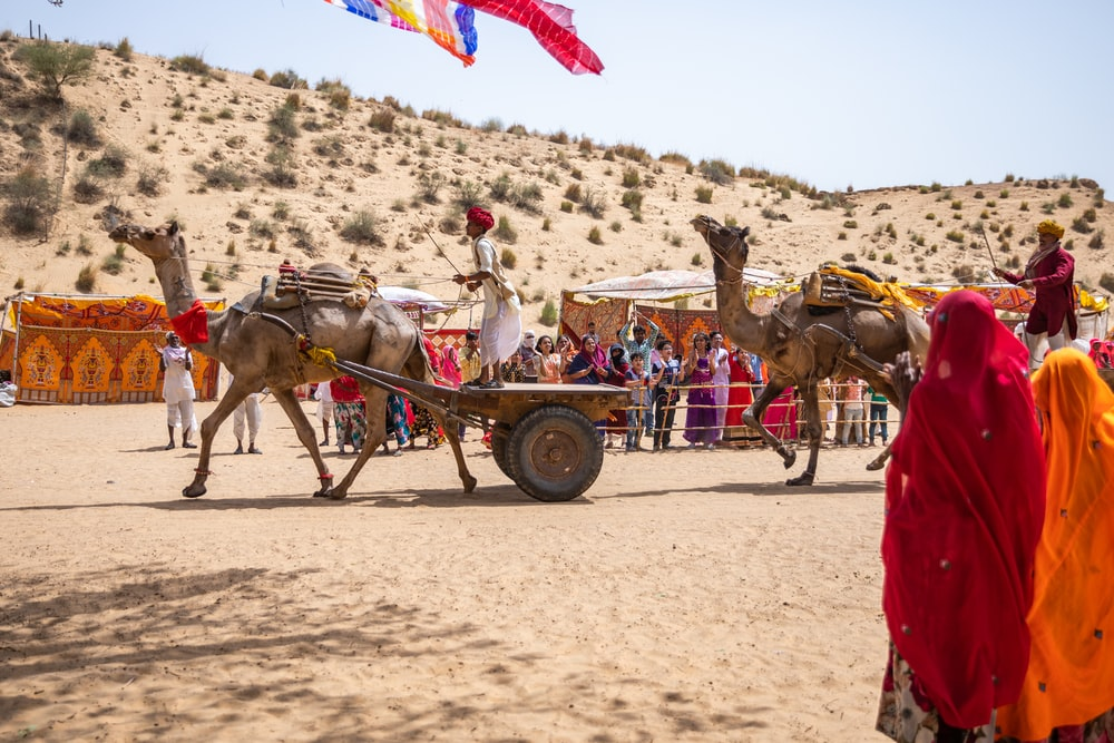person riding carriage with camel