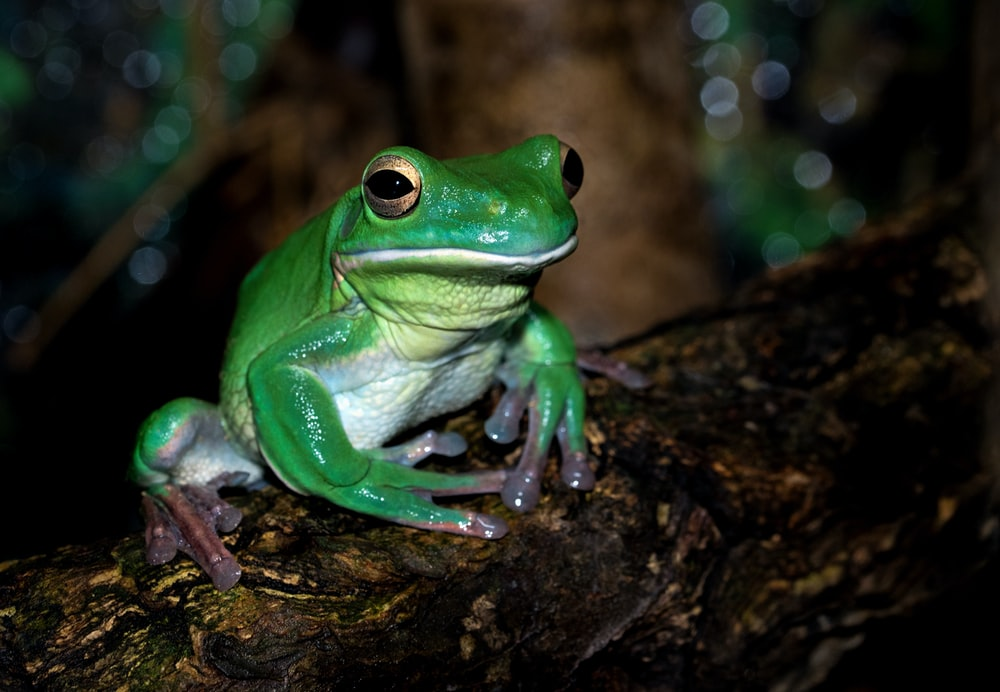 green frog on brown surface